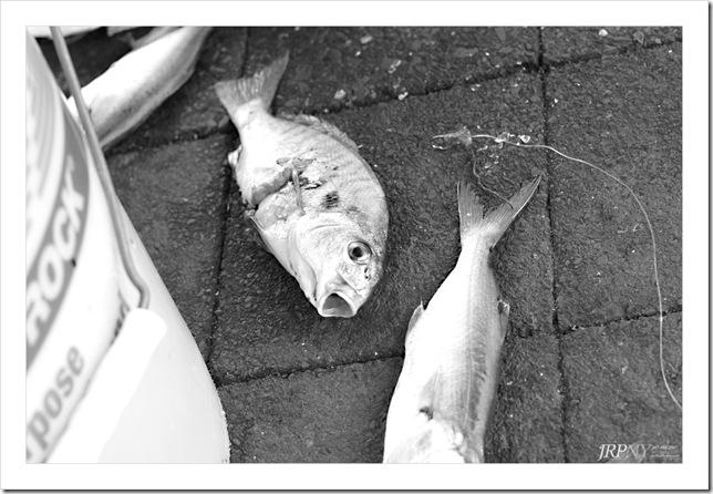 bait-of-staten-island-pier