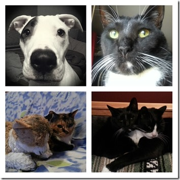 my pets collage - JRPNY
